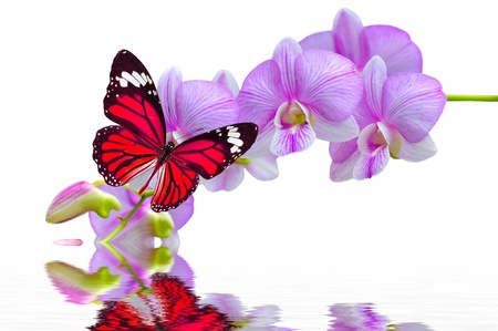 A beautiful colorful butterfly on orchids flowers in water photo