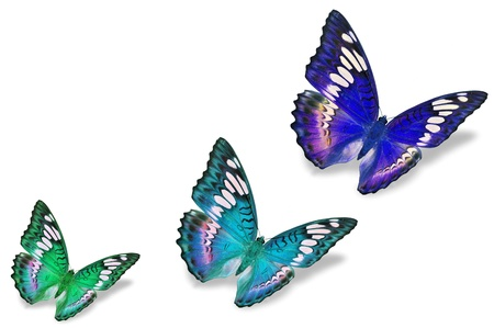 Colorful Butterflies Stock Photo, Picture And Royalty Free Image ...
