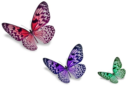 Colorful butterflies Stock Photo - 18140457