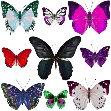 Collection Of Colorful Butterflies Isolated On White Stock Photo ...