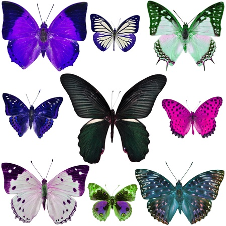 Collection of colorful butterflies isolated on white  Banque d'images
