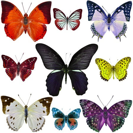 Collection Of Colorful Butterfly Isolated On White Background Stock ...