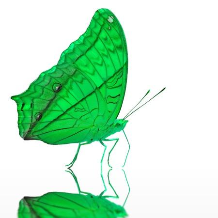 mariposa verde: Verde mariposa, aisladas sobre fondo blanco Foto de archivo
