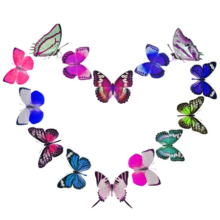 butterfly heart on white background