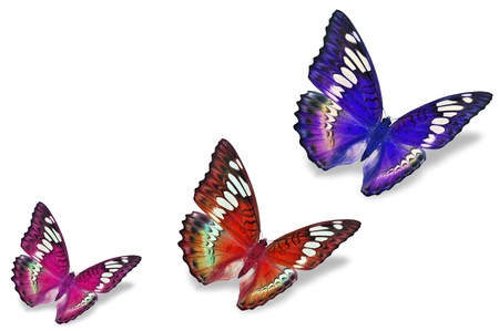 Colorful butterflies  photo