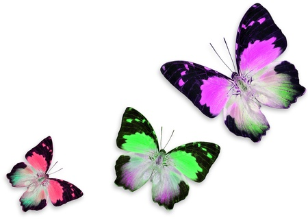 Colorful butterflies isolated on white background photo