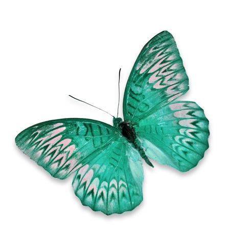 mariposas volando: Blue Butterfly vuelo