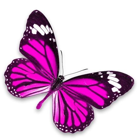 papillon rose: Papillon rose isol? sur fond blanc Banque d'images