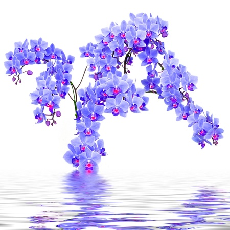 Beautiful purple orchid in the water photo