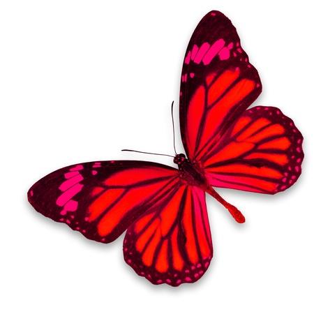 白地に赤い蝶