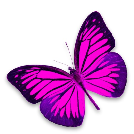 pink butterfly: Pink butterfly isolated on white background