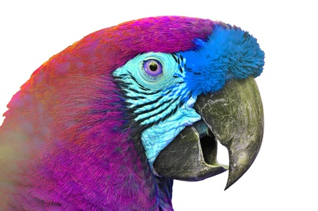 covet: Close-up Colorful Macaw Ara ararauna head