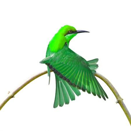 Beautiful colorful bird on white background photo
