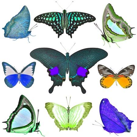 exotic butterflies: Colecci?n de mariposas ex?ticas aisladas en blanco