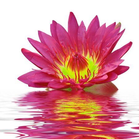 Beautiful lotus flower floating in water photo