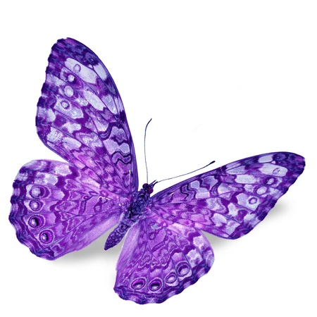 purple butterfly: Purple Butterfly flying, isolated on white background Stock Photo