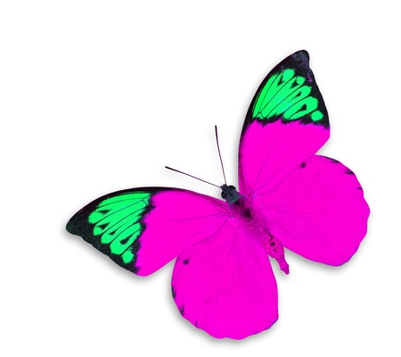 pink butterfly: Pink Butterfly on white background  Stock Photo