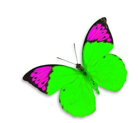 mariposa verde: Mariposa verde sobre fondo blanco