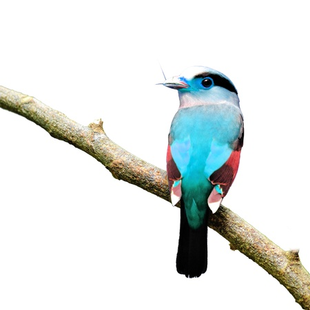 vibrance: Colorful Bird on white background