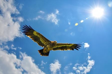 aguilas: Eagles que vuela en el contexto del cielo