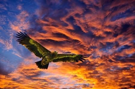 背景の空を飛んでイーグルス 写真素材
