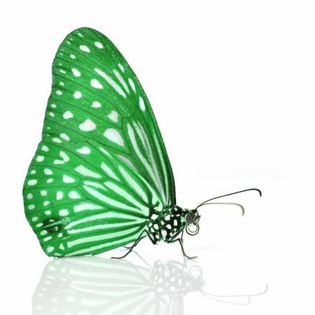 mariposa verde: Mariposa verde aislado en el fondo blanco. Foto de archivo