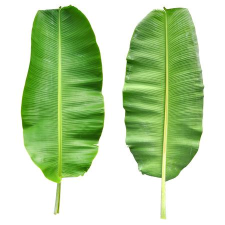 バナナの葉の分離 写真素材