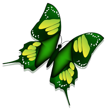 Beautiful butterfly isolated on white background Illustration