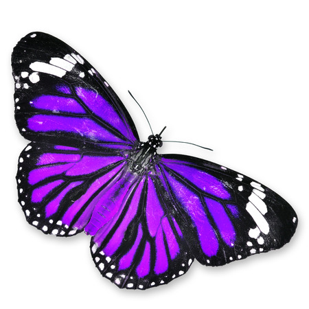 beuty of nature: Purple Butterfly isolated on white background