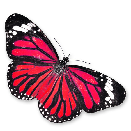 north american butterflies: Red Butterfly isolated on white background Stock Photo