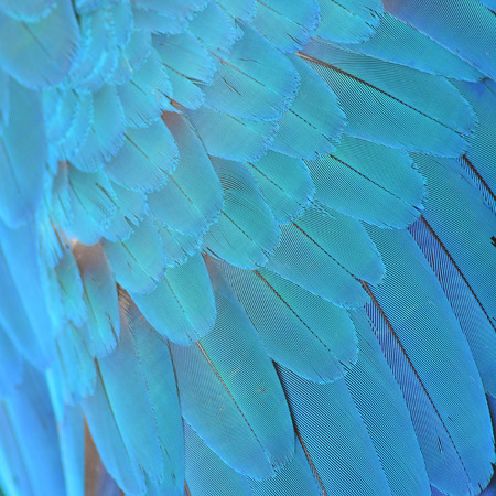 Colorful feathers, Harlequin Macaw feathers  texture photo