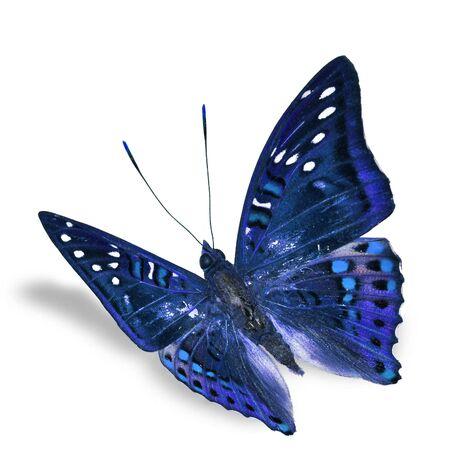 mariposa azul: Vuelo de la mariposa hermosa aislada en el fondo blanco, sombra suave debajo Foto de archivo