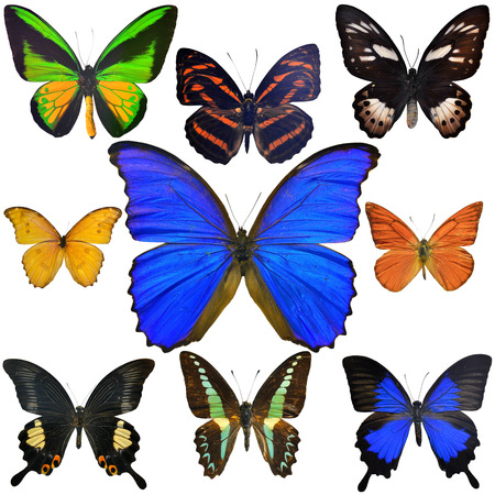 exotic butterflies: Colecci�n Mariposas ex�ticas aisladas sobre fondo blanco