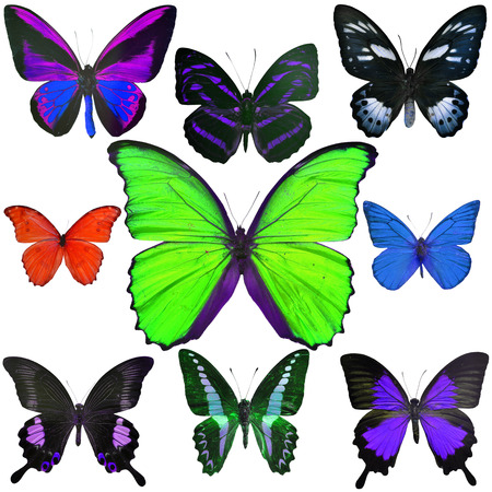 Exotic butterflies collection isolated on white background photo