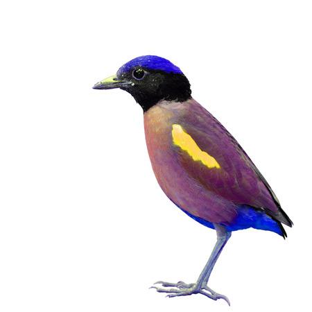 side profile: Bella uccello colorato su sfondo bianco, profilo laterale