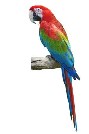 白い背景上に分離されて美しい赤と緑のコンゴウインコ