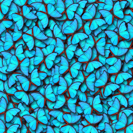 Blue butterfly for background or texture Standard-Bild