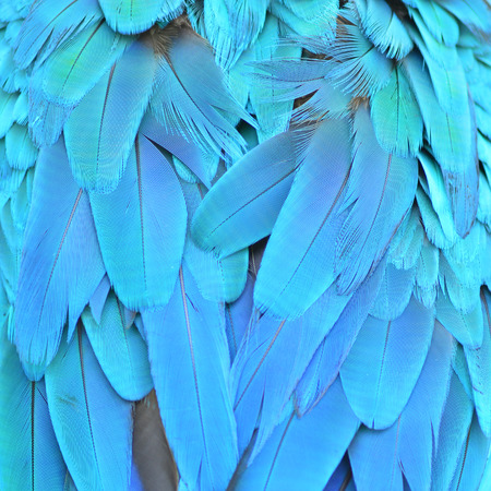 Scarlet Macaw feathers background texture photo