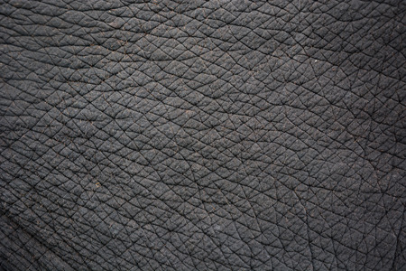 elephant skin for background or texture Banco de Imagens
