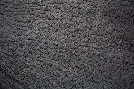 olifantenhuid voor achtergrond of textuur