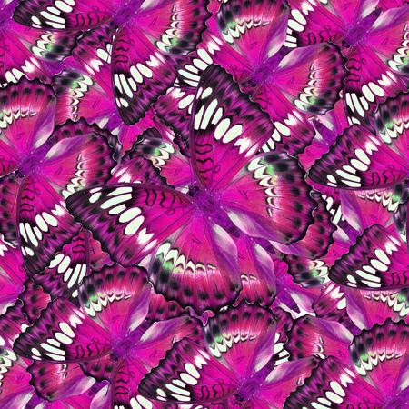 papillon rose: Belle papillon rose pour le fond ou la texture Banque d'images