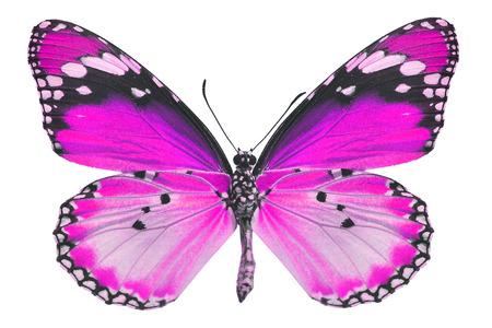beautifu: Beautifu pink butterfly isolated on white background