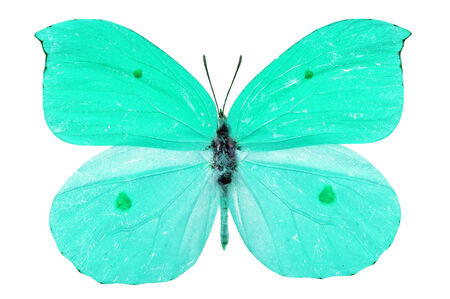 entomological: Beautiful blue butterfly isolated on white background Stock Photo