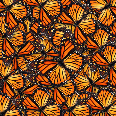 Beautiful monarch butterfly for background or texture Standard-Bild