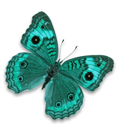 Beautiful blue butterfly butterfly isolated on white background Stock Photo