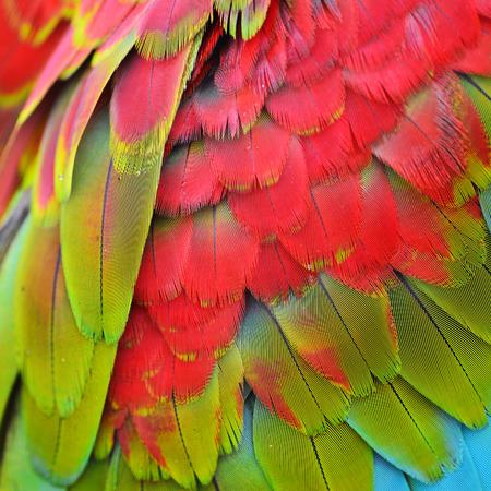 animales de la selva: Plumas de guacamayo escarlata, colorido textura de fondo