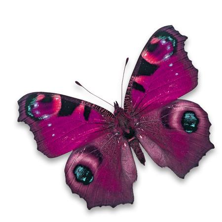 papillon rose: Belle papillon rose isol� sur fond blanc.