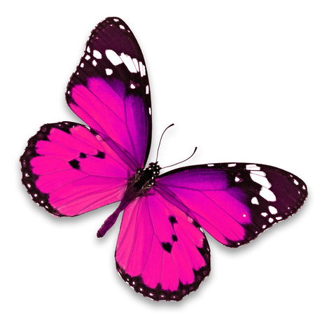Beautiful pink butterfly isolated on white background Standard-Bild