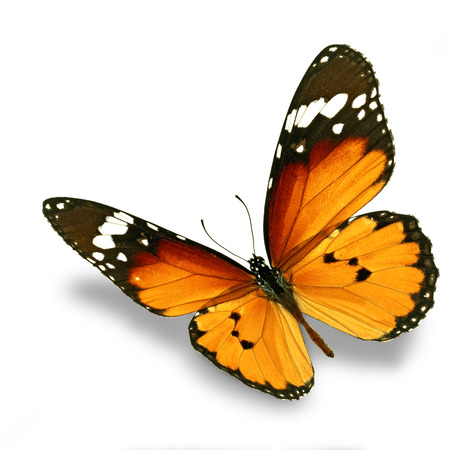 Belle papillon orange voler isolé sur fond blanc Banque d'images - 33943629