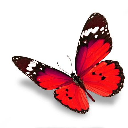 Mooie rode vlinder vliegen geïsoleerd op witte achtergrond Stockfoto